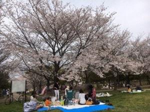 2016 花見1