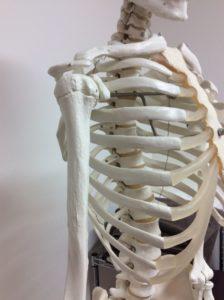 整体ストレッチ 肩関節2