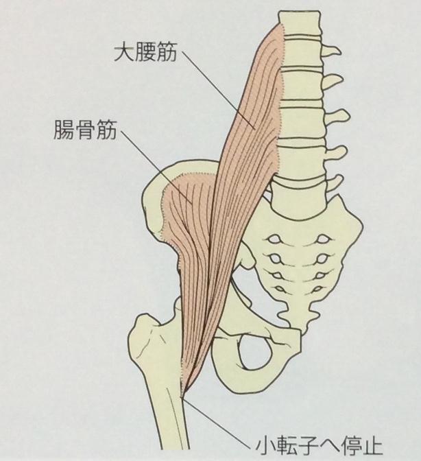 整体ストレッチ 腸腰筋2