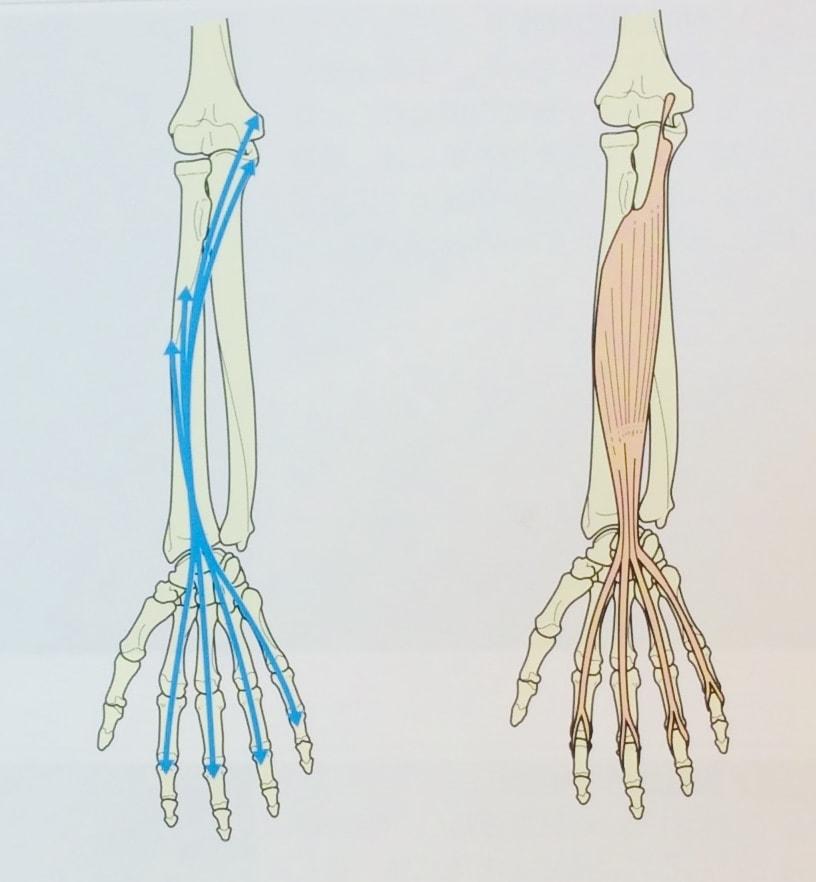 整体ストレッチ 手の指1