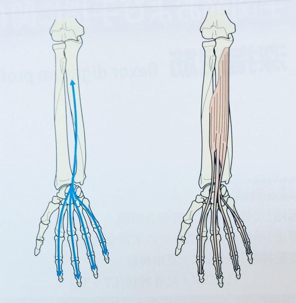 整体ストレッチ 手の指2