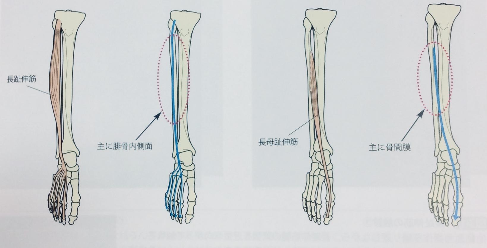 整体ストレッチ 足の指3