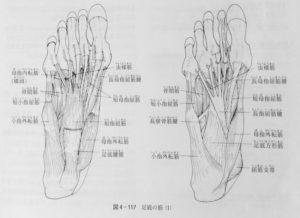 整体ストレッチ 足趾屈筋群2