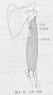 整体ストレッチ(上腕三頭筋)1