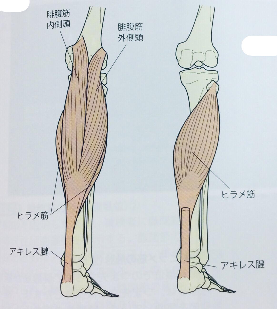 整体ストレッチ 下腿三頭筋1