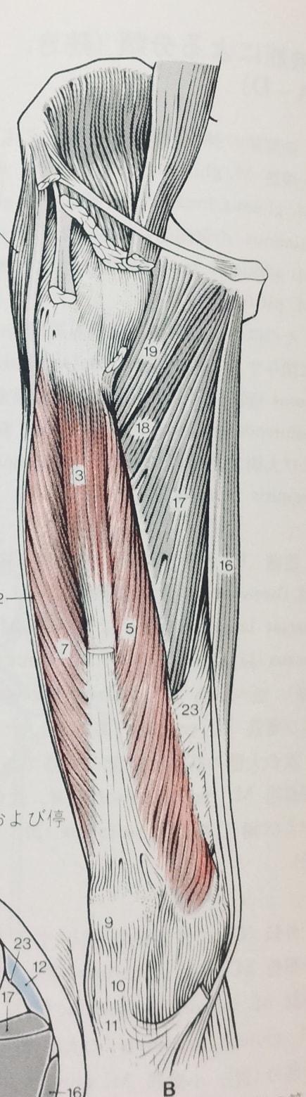 整体ストレッチ 大腿四頭筋2