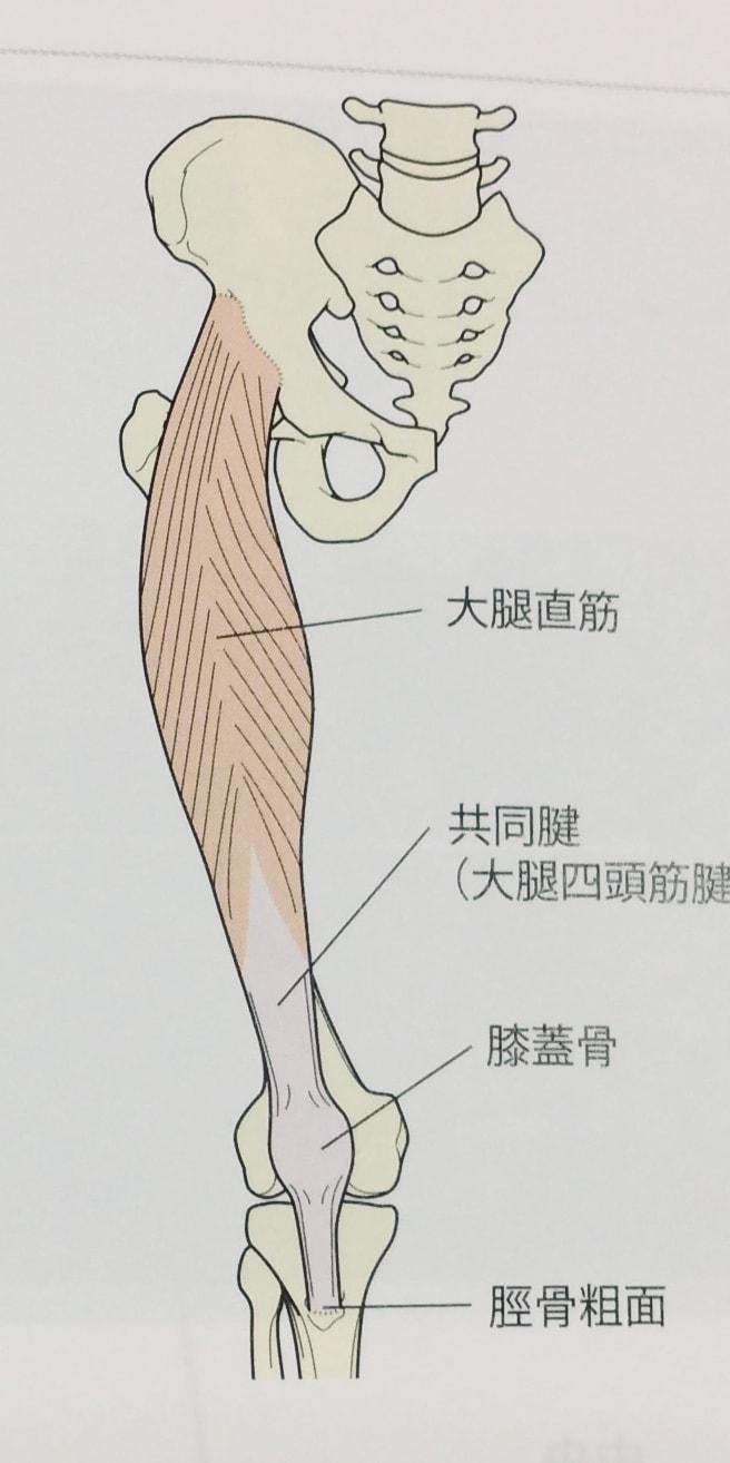 整体ストレッチ 大腿四頭筋1