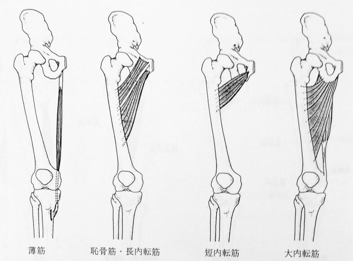 整体ストレッチ 股関節内転筋1